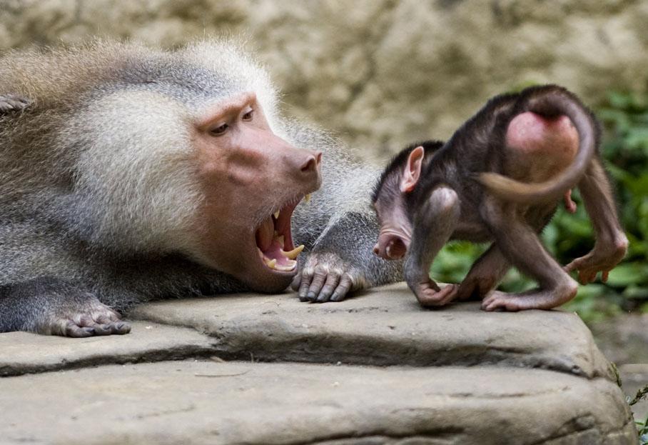 Fabuleux Sélection de photos insolites d'animaux - Article - Francetv Éducation OE53
