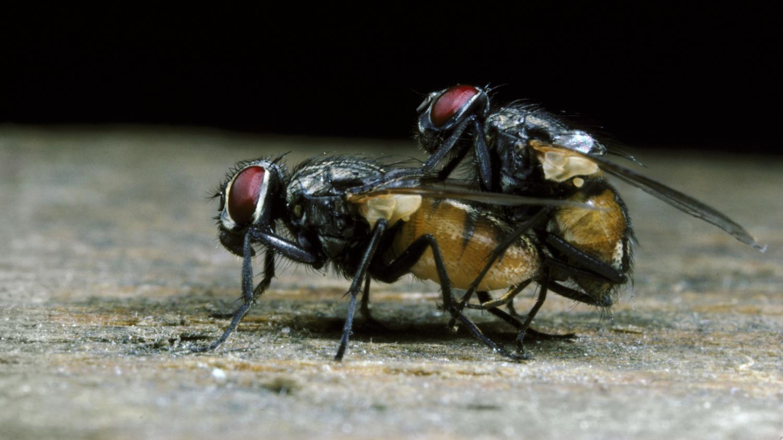 les mouches conduites noient aussi leur chagrin dans l 39 alcool. Black Bedroom Furniture Sets. Home Design Ideas
