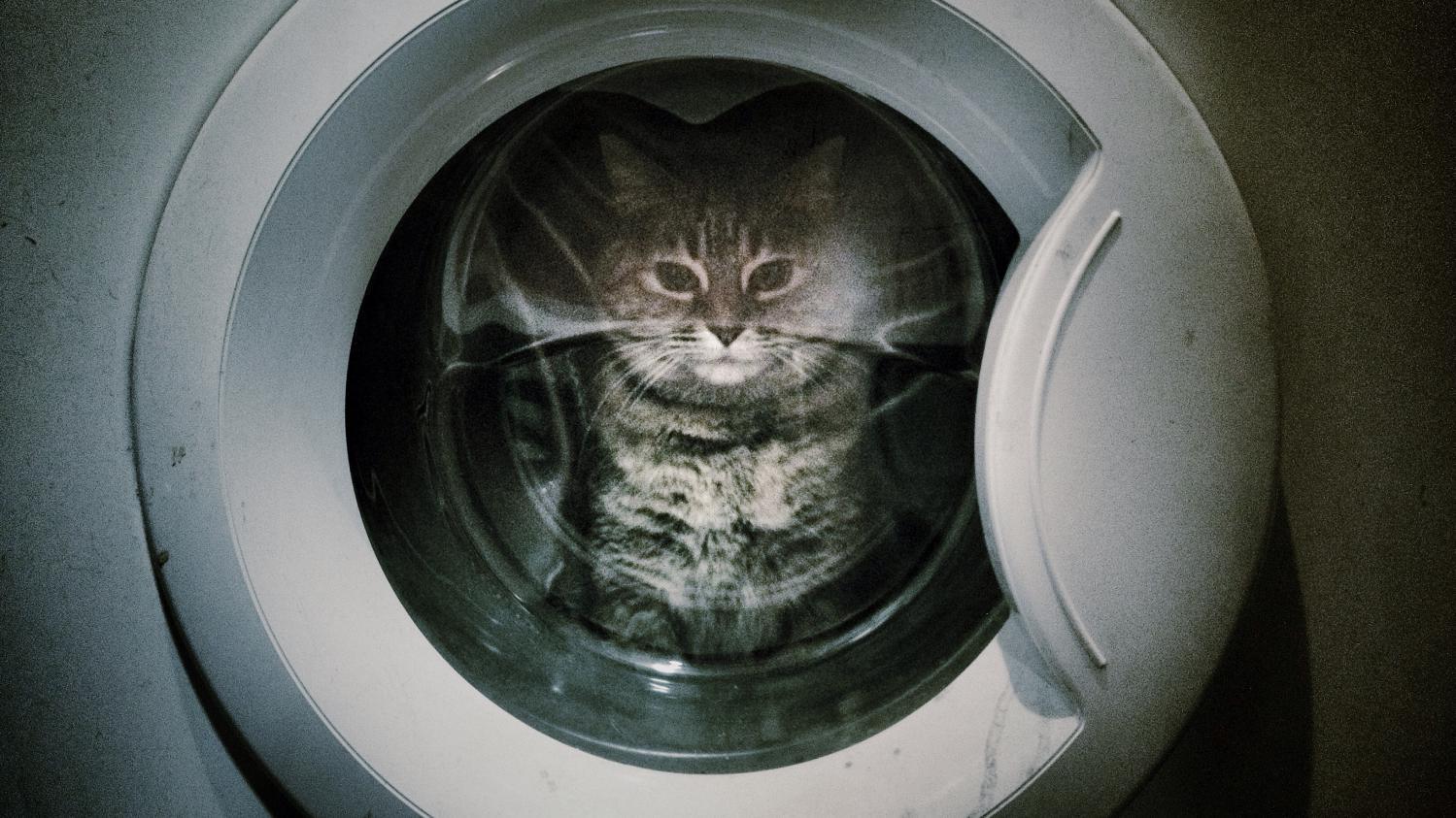 un chat survit deux heures de lavage la machine. Black Bedroom Furniture Sets. Home Design Ideas