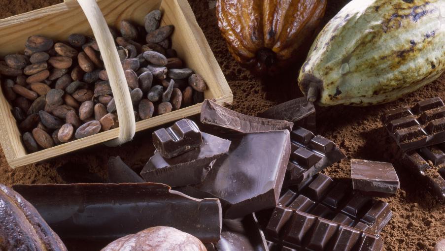 la culture du cacao est menac e. Black Bedroom Furniture Sets. Home Design Ideas