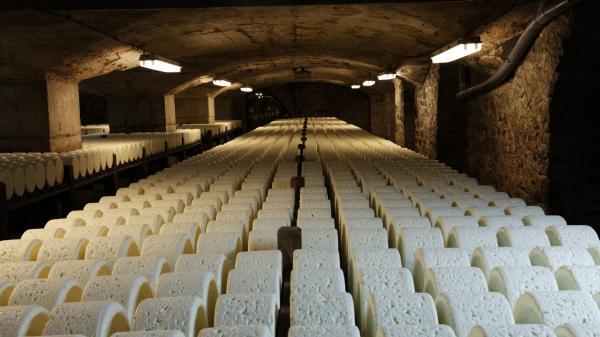 Suisse : des fromages affinés en musique