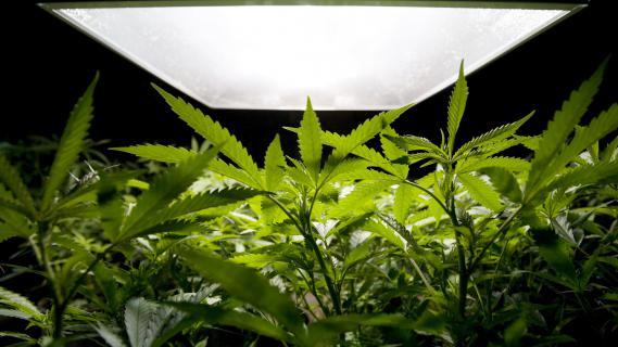 Au total, les policiers ont saisi quelque 340 kilos de cannabis.