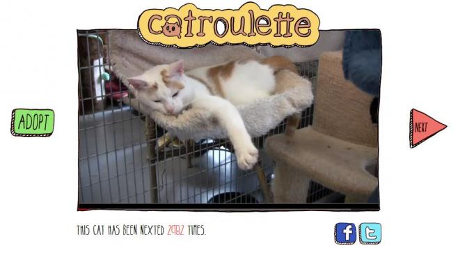 Capture d'écran du site d'adoption de chats Catroulette.be, le 6 septembre 2012.