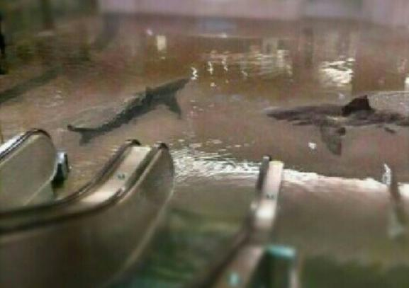Montage photo de requins dans le métro new-yorkais après le passage de l\'ouragan Sandy, le 29 octobre 2012.