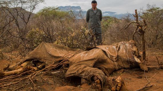 Une carcasse d'éléphant victime des braconniers à Samburu, au Kenya, le 16 août 2012.