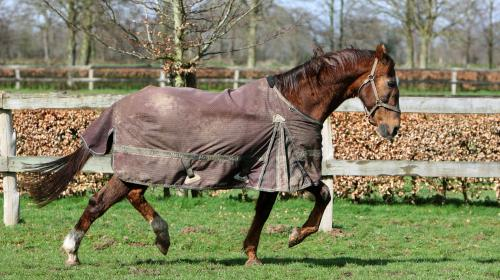 À Bourg-en-Bresse, le ramassage des poubelles se fait à cheval