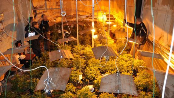 La police française investit une serre où pousse du cannabis, le 4 décembre 2012 à Saverne (Bas-Rhin). Elle était gérée par une organisation criminelle qui faisait également passer clandestinement des immigrants vietnamiens en Europe.