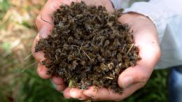 «We're being poisoned»: Bees are dropping dead in Brazil and sending a message to humans