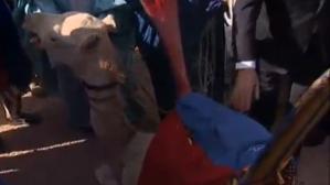 Un jeune chameau offert à François Hollande au Mali