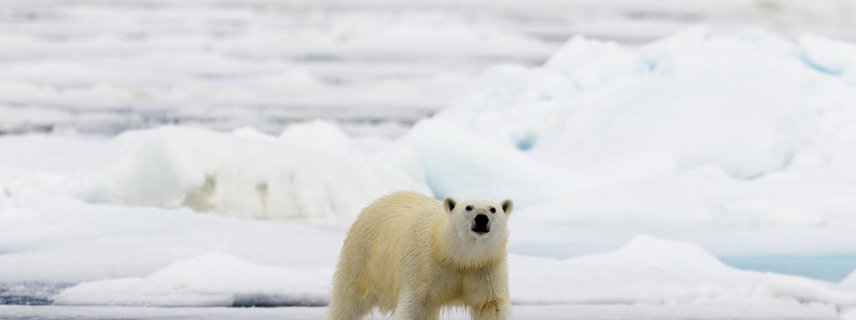 Climat : les scientifiques prévoient une catastrophe à moins d'un sursaut collectif