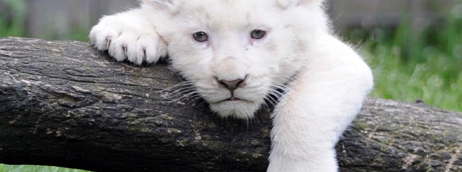 Bretagne : le zoo de Pont Scorff veut relâcher les animaux en milieu naturel