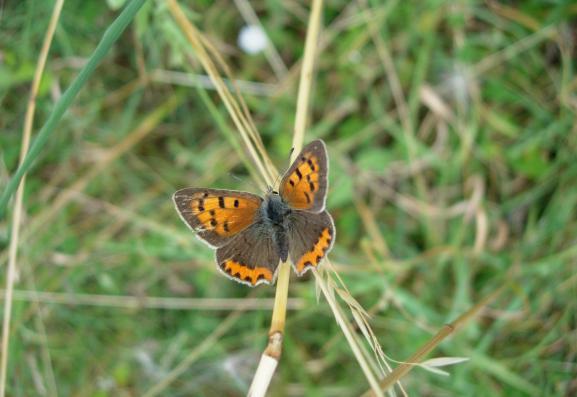 En images d couvrez seize papillons en danger for Garder un amaryllis
