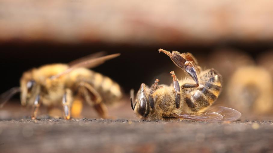 Monsanto - Monsanto au secours des abeilles ??? 2357368