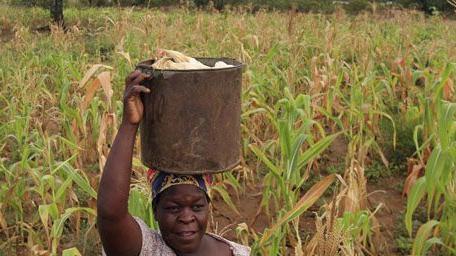 Paysanne transportant du maïs sur sa tête à Chivi, à quelque 380 km au sud-est de Harare, le 1-4-2012.