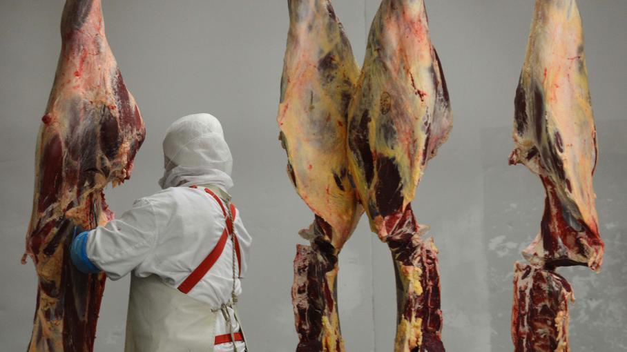Des carcasses de cheval dans un abattoir en Roumanie. Un réseau de trafiquants de viande de cheval a été démantelé lundi 16 décembre, dans le sud de la France et en Espagne.