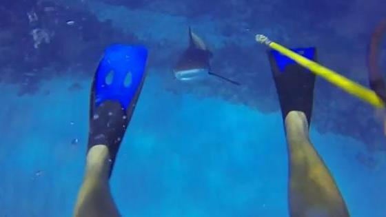 video un plongeur affronte un requin gr ce son harpon de p che sous marine. Black Bedroom Furniture Sets. Home Design Ideas