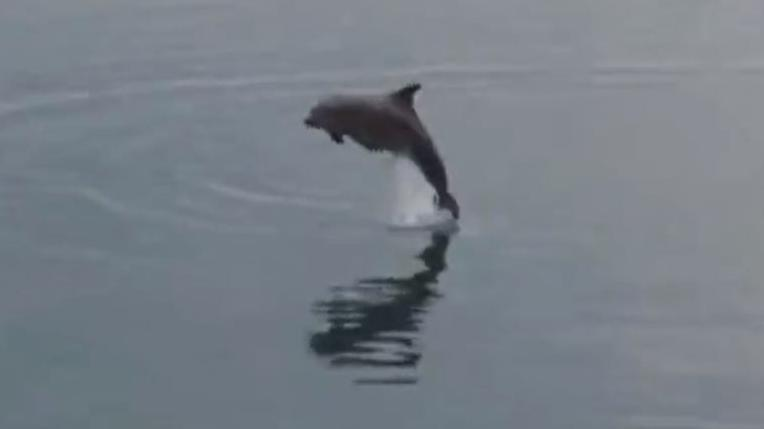 Video un dauphin bloqu dans l 39 estuaire de la rance for Estuaire de la rance
