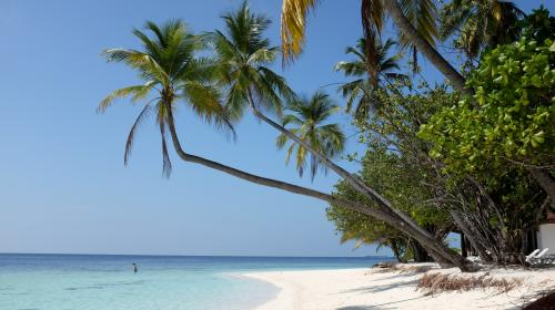 Feuilleton : Maldives, un paradis fragile (1/5)