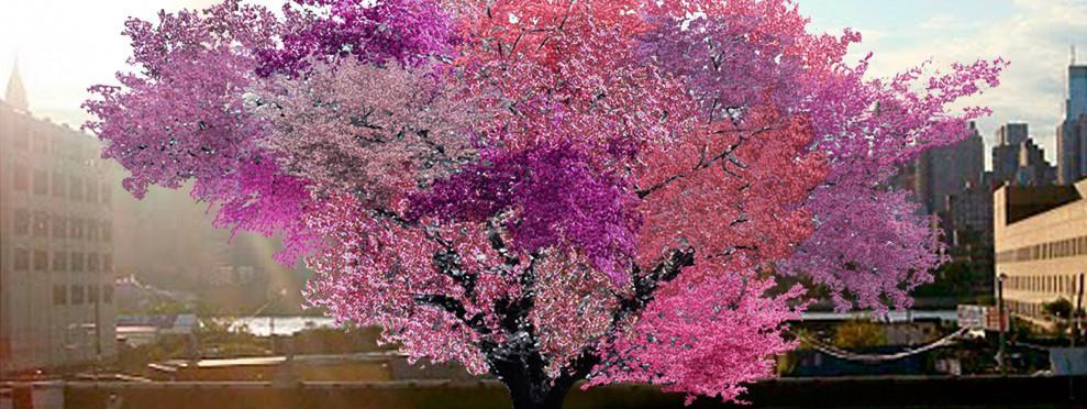 Un am ricain fait pousser un arbre qui peut produire 40 fruits diff rents - Arbre de l avocat ...