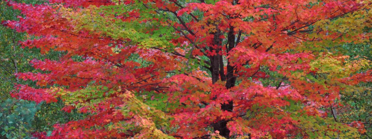 en images aux etats unis et au canada la nature rev t ses habits d 39 automne. Black Bedroom Furniture Sets. Home Design Ideas