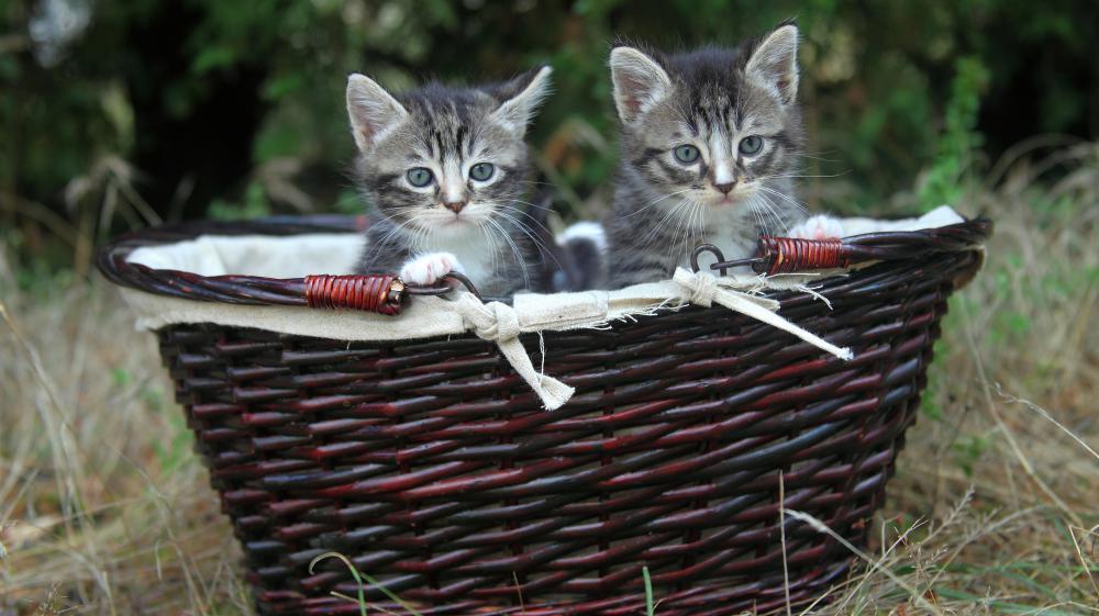 """Pour les députés, les animaux sont désormais des """"êtres vivants doués de sensibilité""""."""