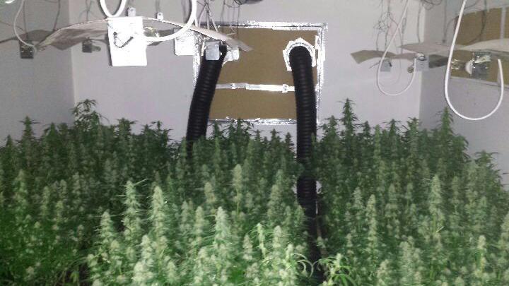 Video mille plants de cannabis saisis en banlieue parisienne for Installation cannabis interieur