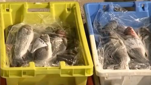 Vacances : à la découverte du commerce poissonnier de Royan