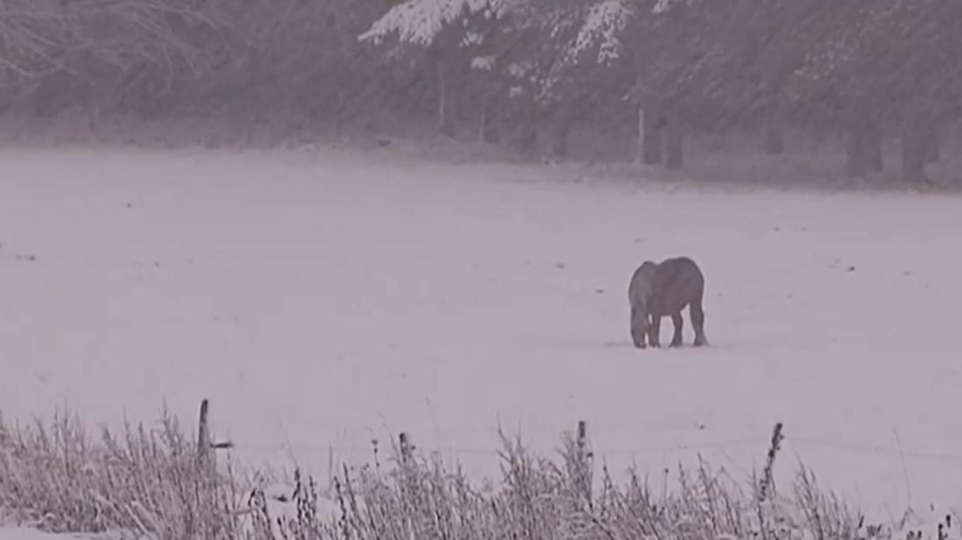 VIDEO. L'Ardèche sous 10 cm de neige - Francetv info