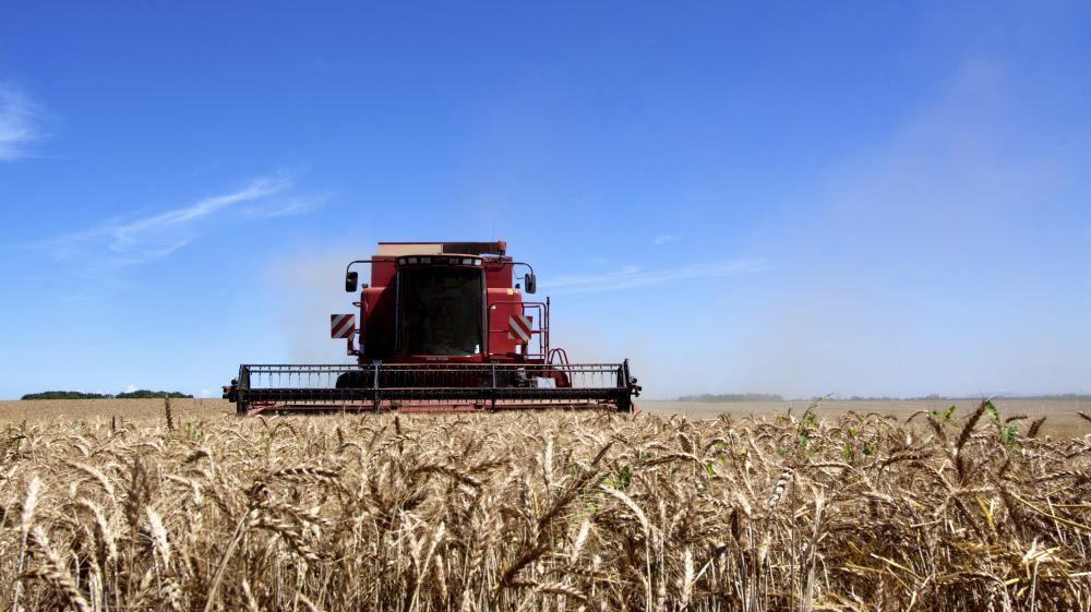 Une moissoneuse-batteuse dans un champ de blé dans l'Allier.