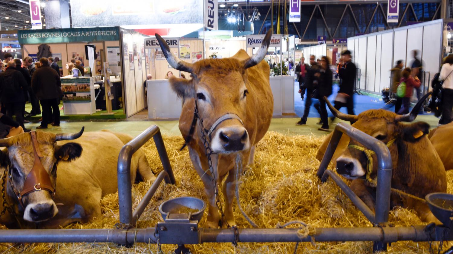 Video quel bilan pour le salon de l 39 agriculture for Agriculture salon