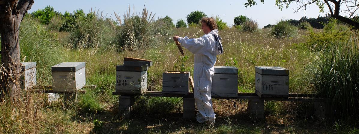 apiculteur marseille