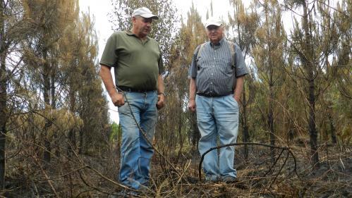 Incendies en Gironde: pour les sylviculteurs, une vie qui part en fumée