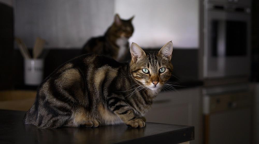 ai je le droit de manger mon chat et mon chien. Black Bedroom Furniture Sets. Home Design Ideas