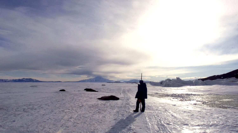 video vivez une journ e d 39 t en antarctique quand le soleil ne se couche jamais. Black Bedroom Furniture Sets. Home Design Ideas