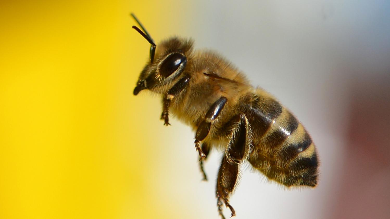 l 39 apipuncture gu rir gr ce au venin des abeilles. Black Bedroom Furniture Sets. Home Design Ideas