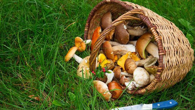 Cinq conseils avant d'aller <br>aux champignons - Limoges (87000)