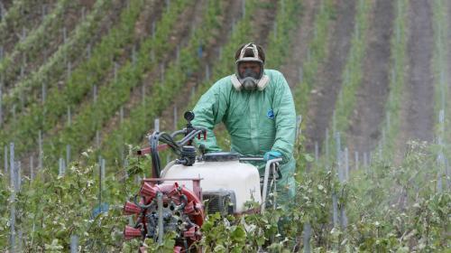 Concurrence déloyale : la grogne des viticulteurs d'Occitanie