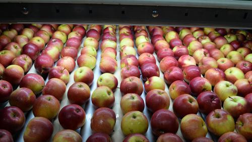 Le cri d'alarme des producteurs de fruits européens