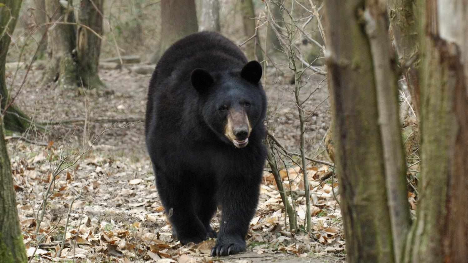 M t o l 39 hiver sera t il aussi froid que les ours du zoo for Zoo yvelines 78