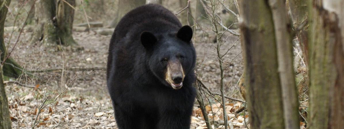 M t o l 39 hiver sera t il aussi froid que les ours du zoo for Parc animaux yvelines
