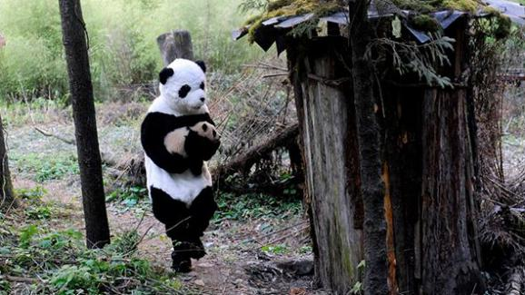 """Résultat de recherche d'images pour """"photo personne déguisée pour soigner les panda"""""""