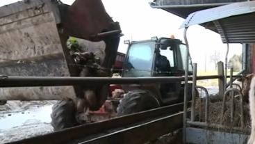 Crise agricole : quand les éleveurs se lancent dans la vente directe