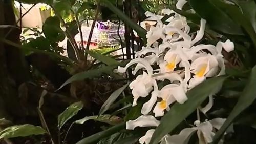 L'orchidée, une fleur aux mille secrets