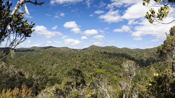 Environnement : les forêts tropicales à l'agonie ?