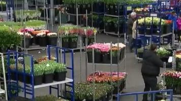 VIDEO. Saint-Valentin : immersion dans le marché des fleurs