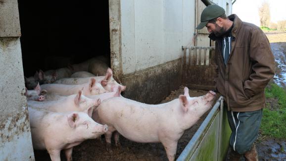 Christophe Gosselin devant ses cochons dans son élevage de Fervaches (Manche) le 11 février 2016.