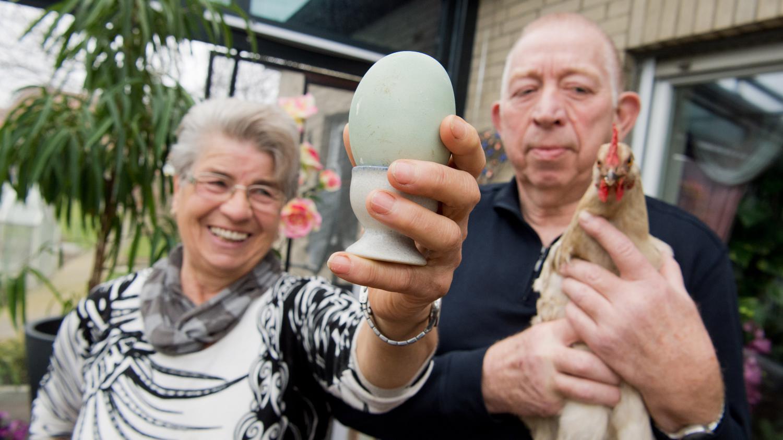 Une poule allemande pond l 39 un des plus gros ufs de l 39 histoire - A quelle age pond une poule ...