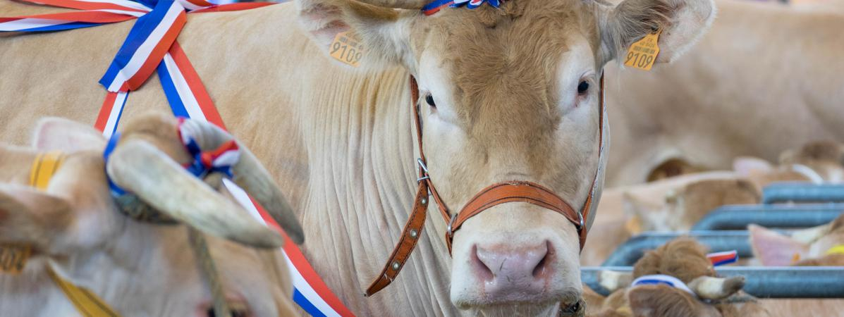 Le salon de l 39 agriculture ferme ses portes avec une fr quentation en baisse de 11 - Porte de versailles animaux ...