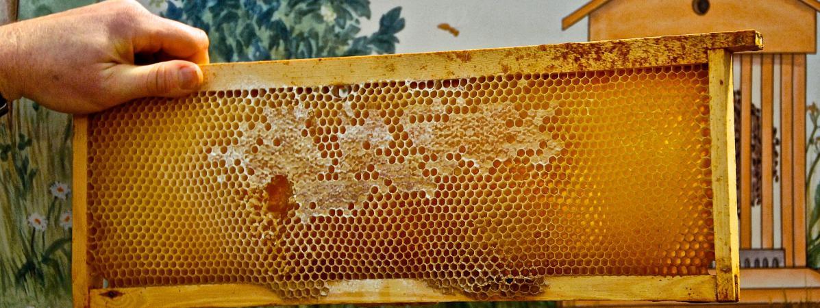 pour la premi re fois en vingt ans la production de miel fran aise fait un l ger bond. Black Bedroom Furniture Sets. Home Design Ideas