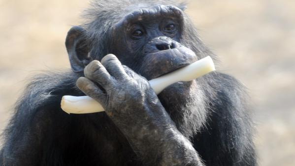 Zoos : dans les coulisses de ces parcs animaliers à succès